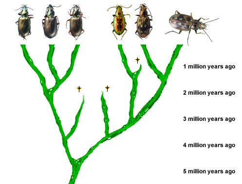 Tree of beetle species