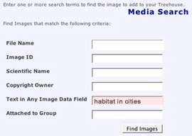 Do not type in whole sentences when searching for media in the ToL database